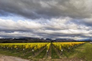 Waihopai Vineyard - Vintage 2012.