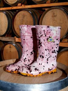One of the winemakers boots in the barrel room during vintage.